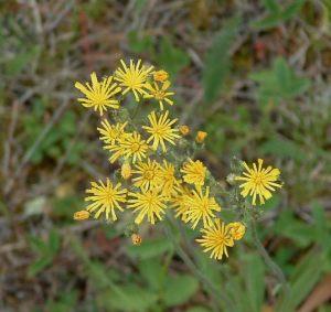 Esnagami River Flora