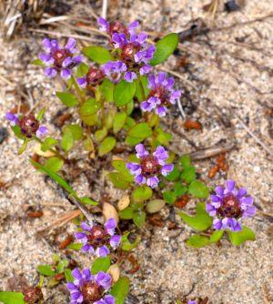 Petersen Lake Flora
