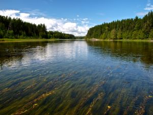 Sturgeon River, Ontario
