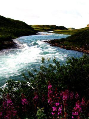 Tree River
